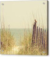 Beach Fence In Grassy Dune South Carolina Acrylic Print