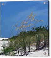Beach Grass 3 Acrylic Print