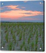 Beach Grass Farm Acrylic Print