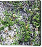 Beach Ground Cover Acrylic Print