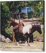 Beach Horses Acrylic Print