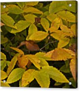Beach Leaves Acrylic Print