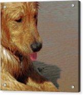 Beach Pup Acrylic Print