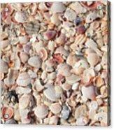 Beach Seashells Acrylic Print