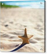 Beach Starfish Wood Texture Acrylic Print