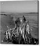 Beach Stump Acrylic Print