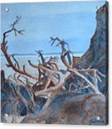 Beach Tangle Acrylic Print