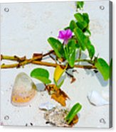 Beach Treasures Acrylic Print