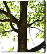 Beach Tree Acrylic Print