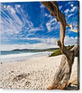 Beach View Carmel By The Sea California Acrylic Print by George Oze