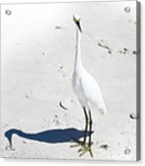 Beached Egret-bonita Beach Fl Acrylic Print