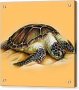 Beached For Promo Items Acrylic Print