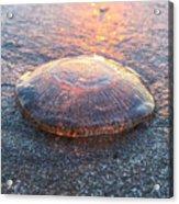 Beached Jellyfish Acrylic Print