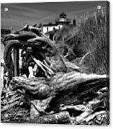 Beached Tree Stump Acrylic Print