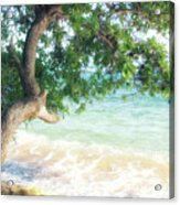 Beachscape Tree Acrylic Print