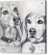 Beagle Boys Acrylic Print