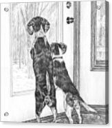 Beagle-eyed - Beagle Dog Art Print Acrylic Print