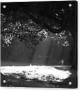 Beams Of Light Acrylic Print