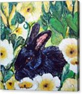 Bean The Magical Rabbit -pet Portrait Acrylic Print