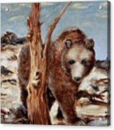 Bear And Stump Acrylic Print