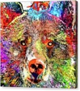 Bear Colored Grunge Acrylic Print