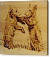 Bear Cubs Acrylic Print