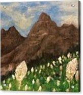 Bear Grass Bloom 2017 Acrylic Print