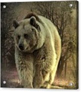Bear In The Woods Acrylic Print