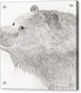 Bear In Water Acrylic Print