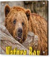 Bear Nature Boy Acrylic Print