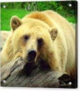 Bear On A Log Acrylic Print