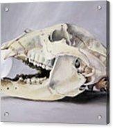 Bear Skull And Egg - Life Goes On Acrylic Print