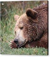 Bear Sleeping Acrylic Print