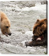 Bear Watches Another Eat Salmon In River Acrylic Print