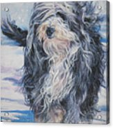 Bearded Collie In Snow Acrylic Print