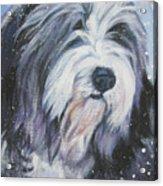 Bearded Collie In Snow Acrylic Print