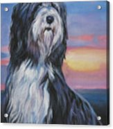 Bearded Collie Sunset Acrylic Print