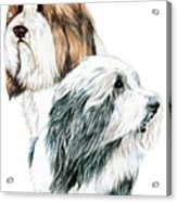 Bearded Collies Acrylic Print