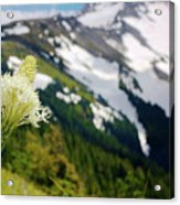 Beargrass Flower On The Slopes Of Mt. Hood Acrylic Print