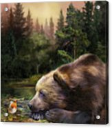 Bear's Eye View Acrylic Print