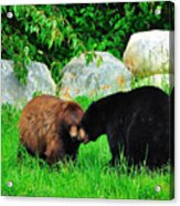 Bears In Love Acrylic Print