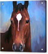 Beau  Quarter Horse Portrait Acrylic Print