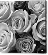 Beauties In Black And White Acrylic Print