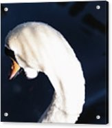 Beautiful Abstract Surreal White Swan Looking Away Acrylic Print