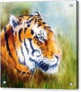 Beautiful Airbrush Painting Of A Mighty Fierce Tiger Head On A Soft Toned Abstract Gres Background  Acrylic Print