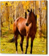 Beautiful Autumn Horse Acrylic Print