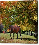 Beautiful Bay Horse In Fall Acrylic Print