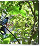 Beautiful Bird Perched In A Tree Acrylic Print