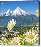 Beautiful Blooming Flower Panorama Acrylic Print