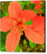 Beautiful Blossom Acrylic Print